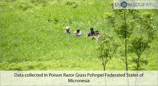 Data collected in Poison Razor grass Pohnpei Federated States of Micronesia